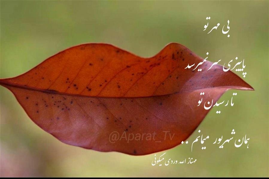 هنر شعر و داستان محفل شعر و داستان مهناز الله وردی میگونی مهر ، پاییز ، شعر پریسکه، مهناز الله وردی میگونی، پاییز میگون،