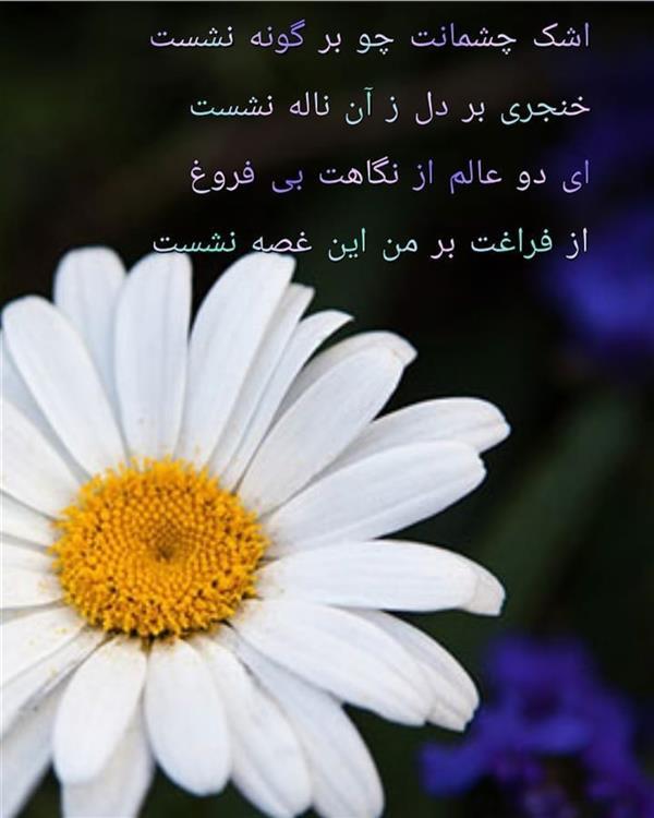 هنر شعر و داستان محفل شعر و داستان مریم جمشیدی عینی #اشک شاعر: مریم جمشیدی