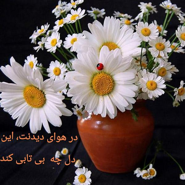 هنر شعر و داستان محفل شعر و داستان مریم جمشیدی عینی #هوای دیدنت مریم جمشیدی عینی