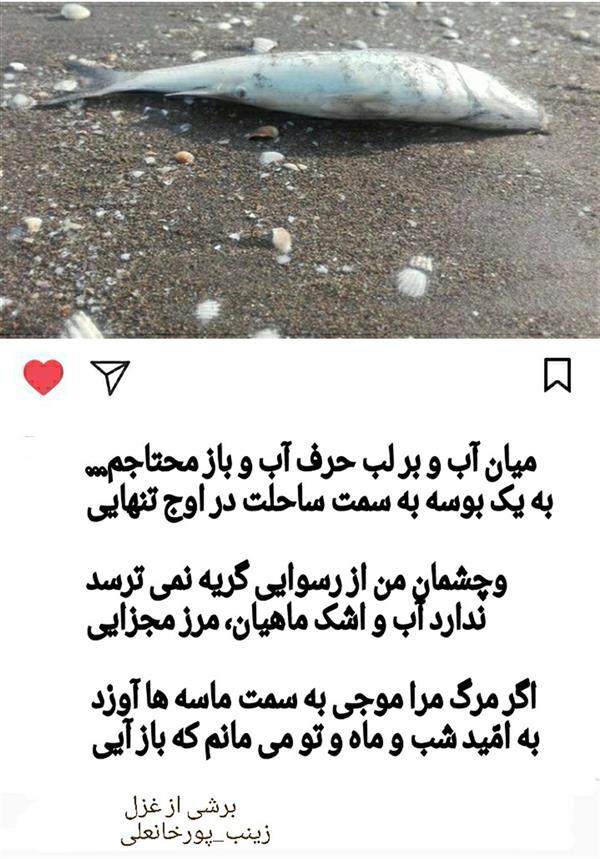 هنر شعر و داستان محفل شعر و داستان زینب پورخانعلی زینب پورخانعلی1398