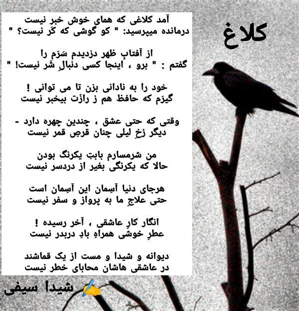 هنر شعر و داستان محفل شعر و داستان شیدا سیفی کلاغ، شیدا سیفی