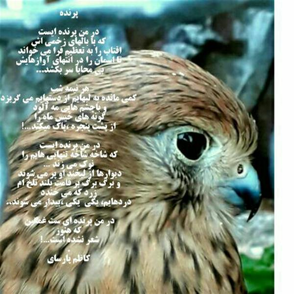 هنر شعر و داستان محفل شعر و داستان کاظم پارسای پرنده  در من پرنده ایست که با بالهای زخمی اش افتاب را به تعظیم فرا می خواند تا اسمان رادر انتهای آوازهایش بی محابا سر بکشد...  هر نیمه شب کمی مانده به لبهایماز دستهایم می گریزد و باچشم هایی مه آلود گونه های خیس ماه را از پشت پنجره،پاک میکند…!  در من پرنده ایست که شاخه شاخهتنهایی هایم را نوک می زند … دیوارهااز لبخند او پر می شوند و برگ برگ بر قامت بلند تلخ ام زرد که می خندد دردهایم، یکی یکی،بیدار می شوند..  در من پرنده ای ست غمگین  که هنوز شعر نشده است…! . کاظم پارسای