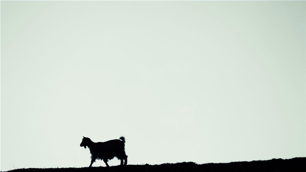 هنر عکاسی عکاسی مینیمال Hossein MohammadPour جانبِ بیجانبی