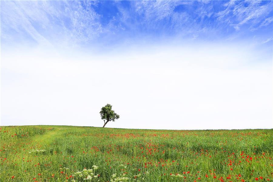 هنر عکاسی بهار رضا زنگنه