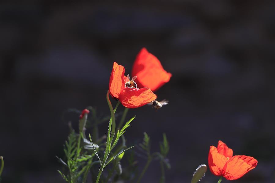 هنر عکاسی بهار Mojahed