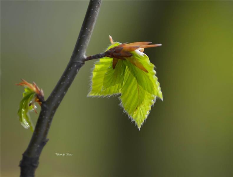 هنر عکاسی بهار سارا سیفی