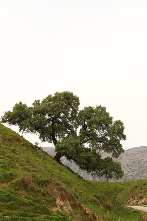 هنر عکاسی عکاسی لنداسکیپ منظره محمدشیخ میری #روستای سوسن