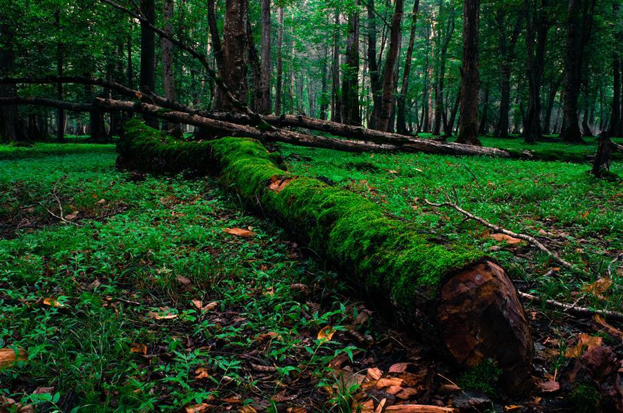 هنر عکاسی عکاسی لنداسکیپ منظره Aminfadakarr پارک جنگلی نور