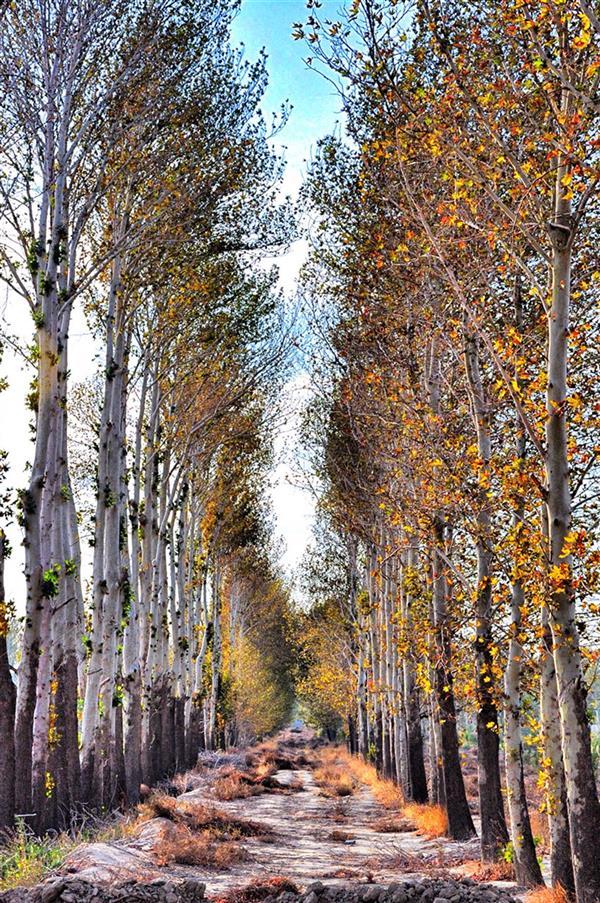 هنر عکاسی عکاسی لنداسکیپ منظره میلاد خزایی میلاد خزایی پاییز،پادشاه فصل ها