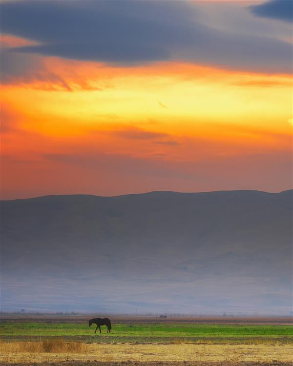 هنر عکاسی عکاسی لنداسکیپ منظره سعید یونسی  زمزمه های اسب