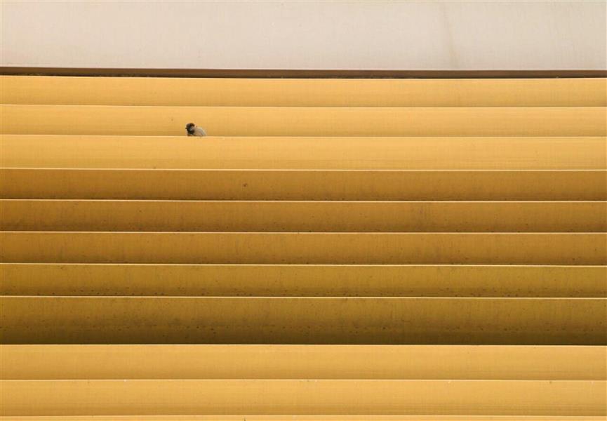 هنر عکاسی نمایشگاه 100هنر فصل سوم بخش عکاسی منصور دهقانی پرنده کوچک بود پرنده فکر نمی کرد پرنده روزنامه نمی خواند پرنده آدم ها را نمی شناخت پرنده روی هوا و بر فراز چراغ های خطر در ارتفاع بی خبری می پرید و لحظه های آبی را دیوانه وار تجربه می کرد پرنده، آه، فقط یک پرنده بود... #فروغ_فرخزاد